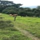 Mixed land use land for sale in Cascajal, Coronado (AD)